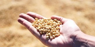 Soybean Fights Against Lung Cancer