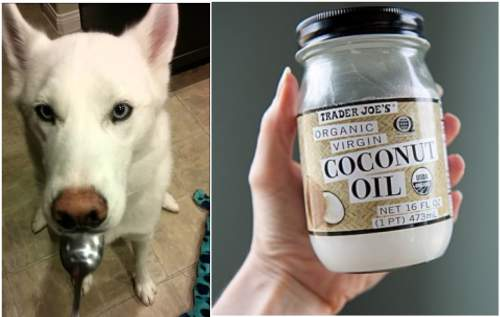 5 Benefits Of Coconut Oil For Your Furry Friend (Pets)