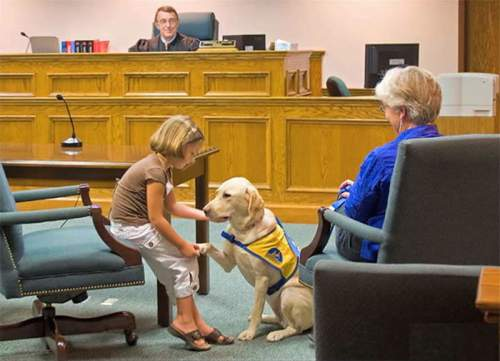 How Courthouse Dogs Are Making A Difference In The Court Room