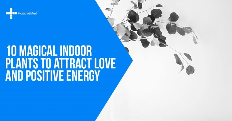 10 Magical Indoor Plants to Attract Love and Positive Energy