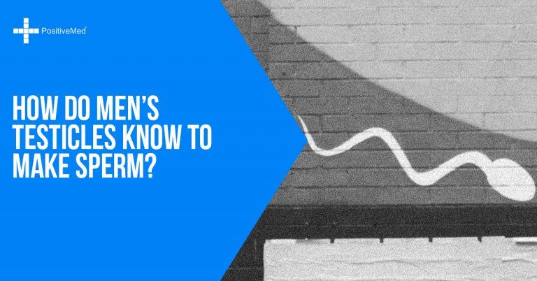 How Do Men's Testicles Know to Make Sperm?