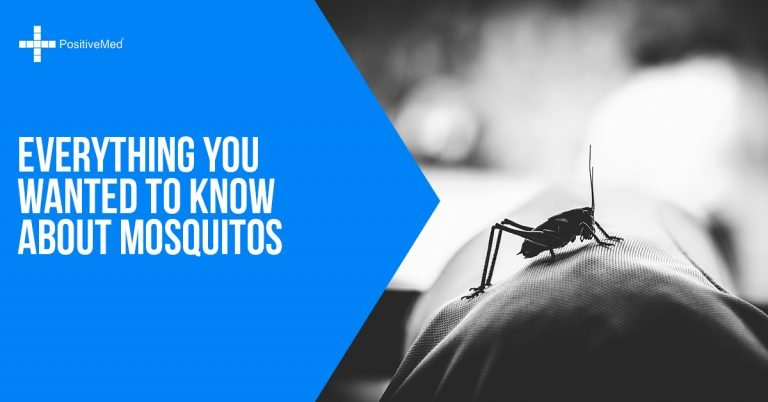 Everything You Wanted To Know About Mosquitos