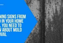 Warning Signs From Mold In Your Home - All You Need to Know About Mold Removal