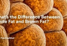 What's the Difference Between White Fat and Brown Fat.