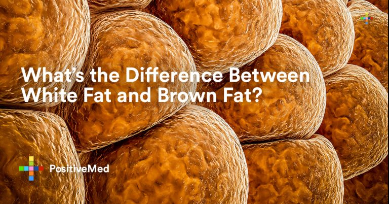 What's the Difference Between White Fat and Brown Fat?