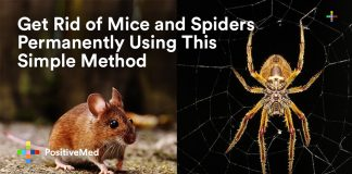 Get Rid of Mice and Spiders Permanently Using This Simple Method.