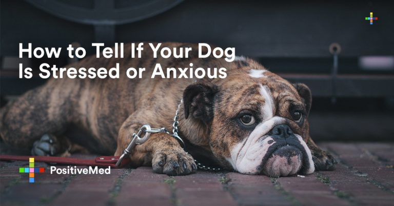 How to Tell If Your Dog Is Stressed or Anxious