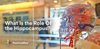 What Is the Role Of the Hippocampus