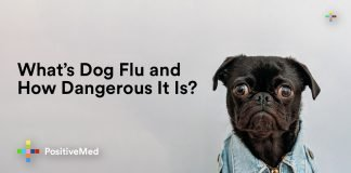 What's Dog Flu and How Dangerous It Is?