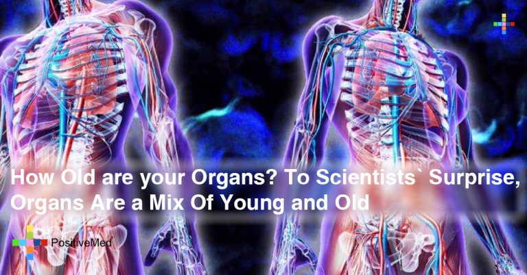 How Old are your Organs? To Scientists' Surprise, Organs Are a Mix Of Young and Old