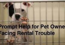 Prompt Help for Pet Owners Facing Rental Trouble