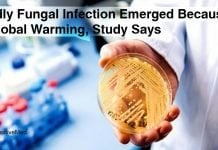 Deadly-Fungal-Infection-Emerged-Because-of-Global-Warming-Study-Says
