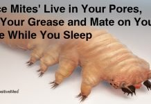 Face-Mites-Live-in-Your-Pores-Eat-Your-Grease-and-Mate-on-Your-Face-While-You-Sleep