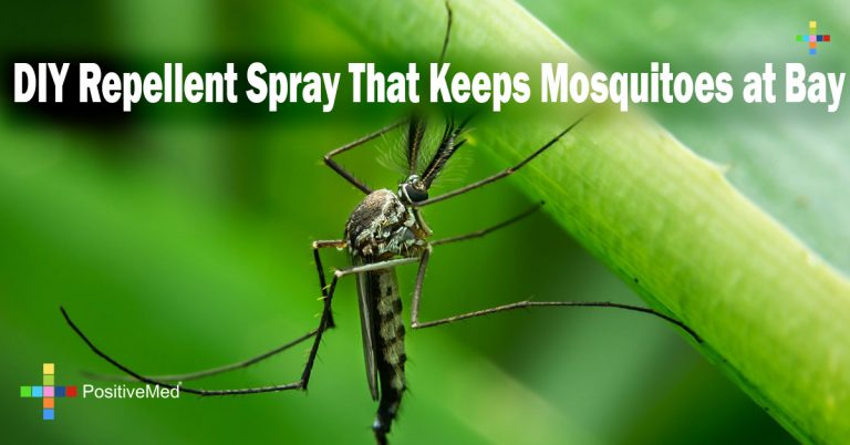DIY Repellent Spray That Keeps Mosquitoes at Bay
