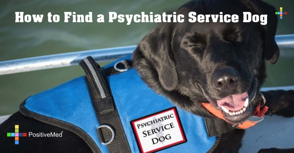 How to Find a Psychiatric Service Dog