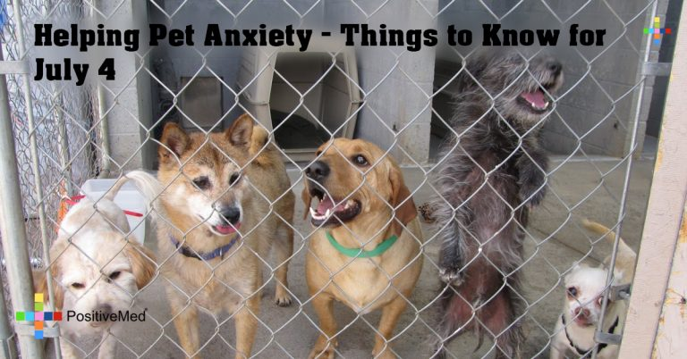 Helping Pet Anxiety – Things to Know for July 4