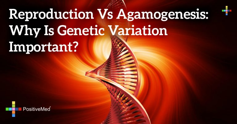 Reproduction vs Agamogenesis: Why Is Genetic Variation Important?