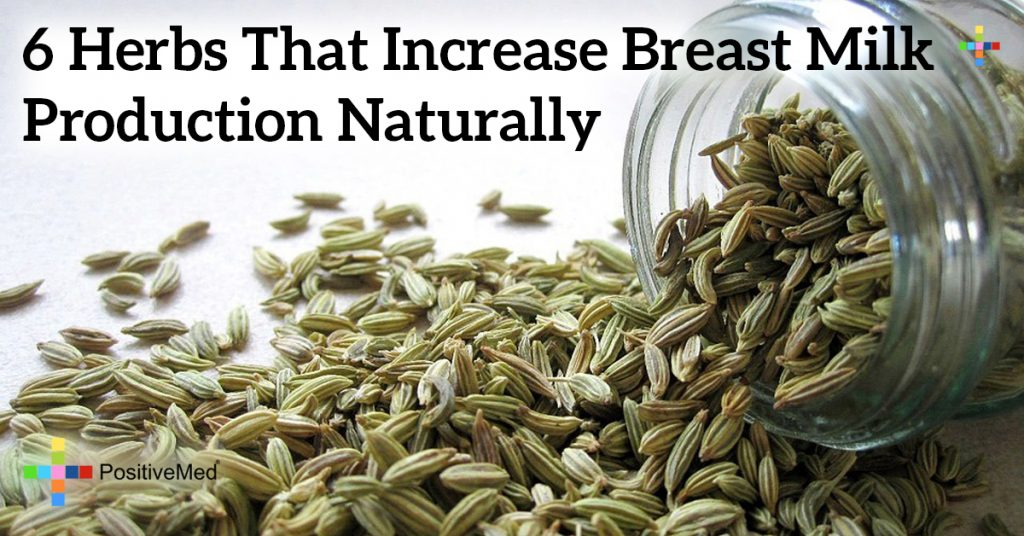 6 Herbs That Increase Breast Milk Production Naturally