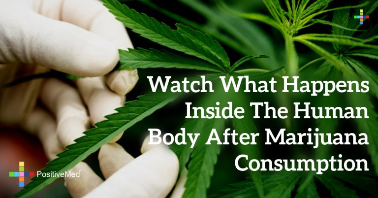 Watch What Happens Inside the Human Body After Marijuana Consumption