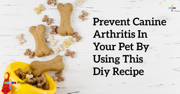 Prevent Canine Arthritis In Your Pet by Using This DIY Recipe