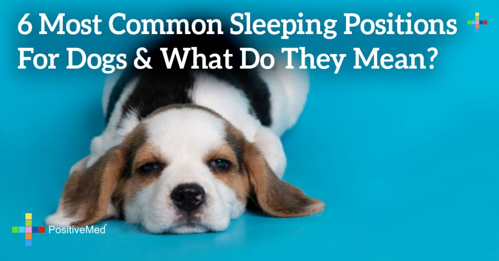 6 Most Common Sleeping Positions For Dogs & What Do They Mean?