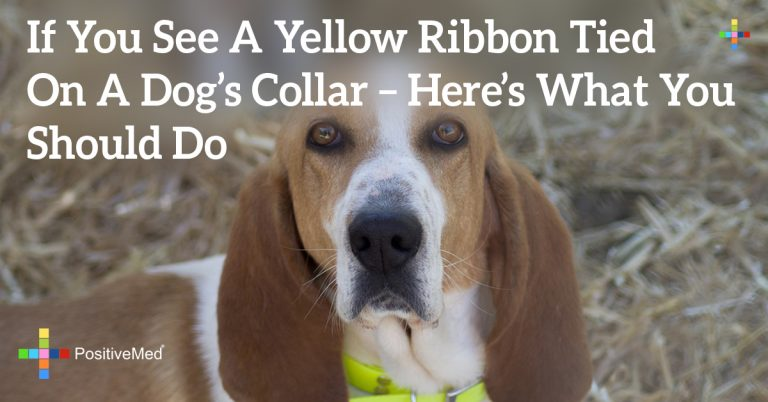 If You See A Yellow Ribbon Tied On A Dog's Collar – Here's What You Should Do