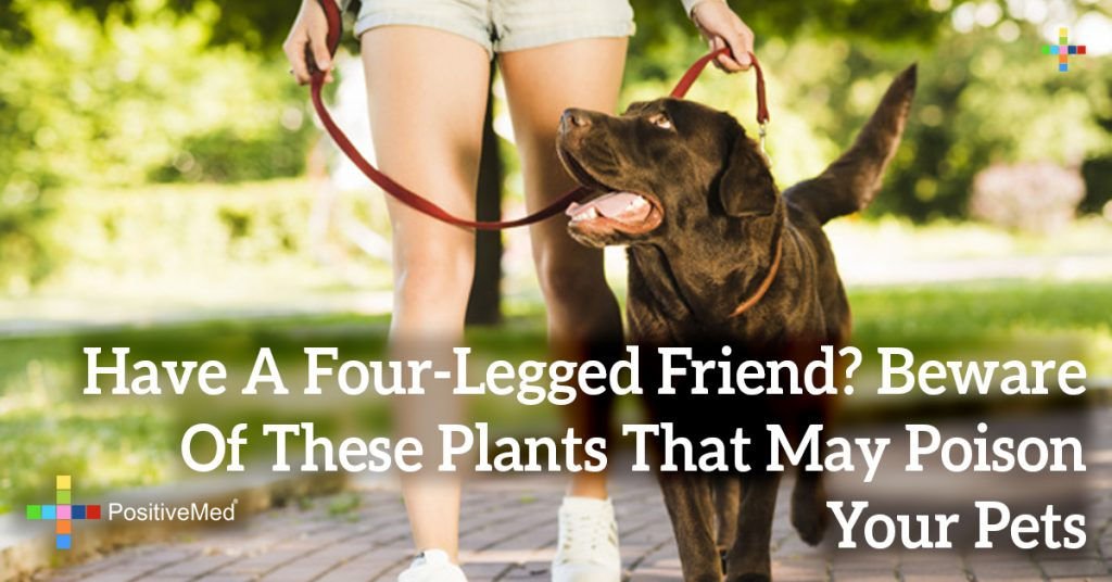 Have A Four-Legged Friend? Beware Of These Plants That May Poison Your Pets