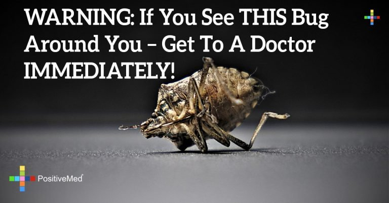 WARNING: If You See THIS Bug Around You – Get To A Doctor IMMEDIATELY!