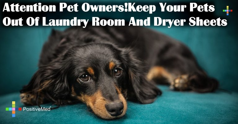 Attention Pet Owners!Keep Your Pets Out Of Laundry Room And Dryer Sheets