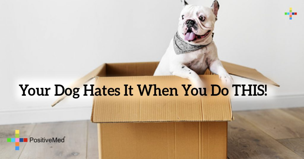 Your Dog Hates It When You Do THIS!