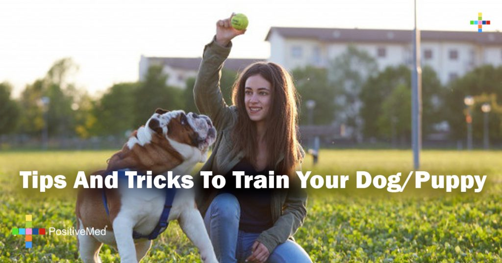Tips And Tricks To Train Your Dog/Puppy