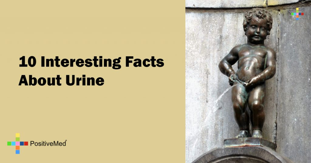 10 Interesting Facts About Urine
