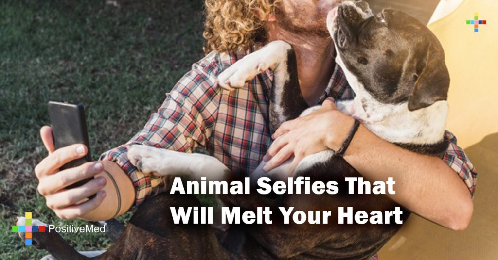 Animal Selfies That Will Melt Your Heart