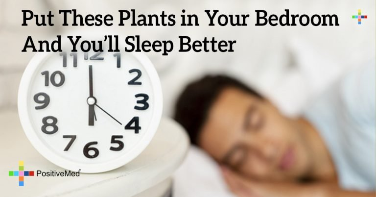 Put These Plants in Your Bedroom And You'll Sleep Better