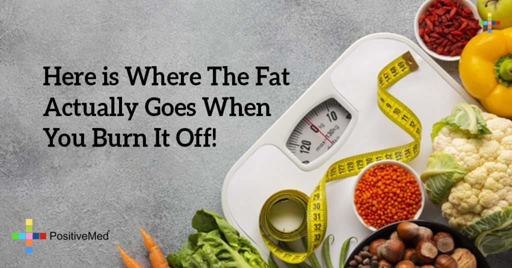 Here is Where The Fat Actually Goes When You Burn It Off!