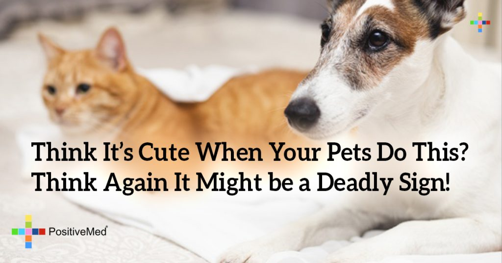 Think It's Cute When Your Pets Do This? Think Again It Might be a Deadly Sign!