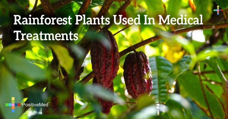 Rainforest Plants Used In Medical Treatments