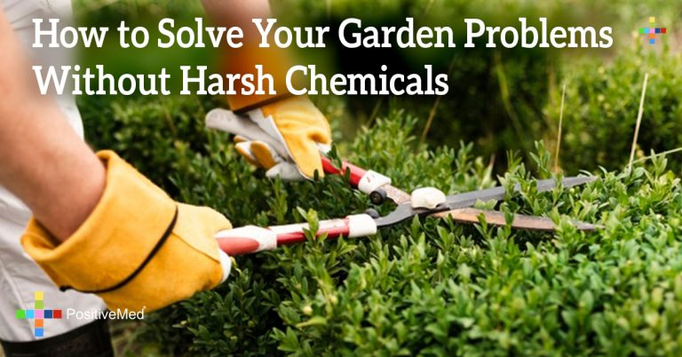 How to Solve Your Garden Problems Without Harsh Chemicals