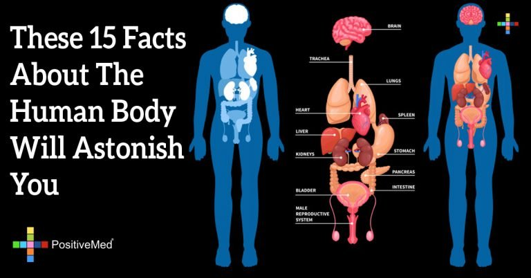 These 15 Facts About The Human Body Will Astonish You