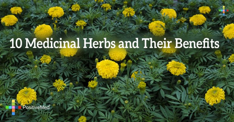 10 Medicinal Herbs and Their Benefits