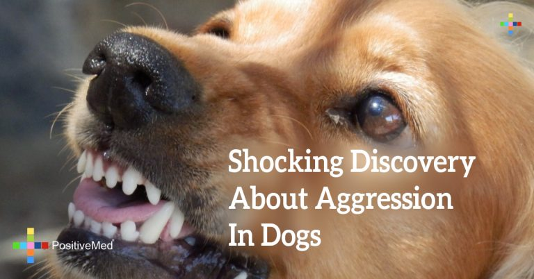 Shocking Discovery About Aggression In Dogs