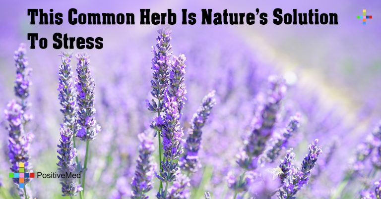 This Common Herb Is Nature's Solution To Stress