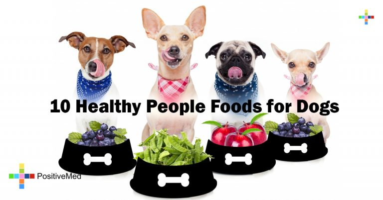 10 Healthy People Foods for Dogs