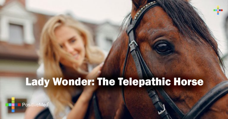 Lady Wonder: The Telepathic Horse