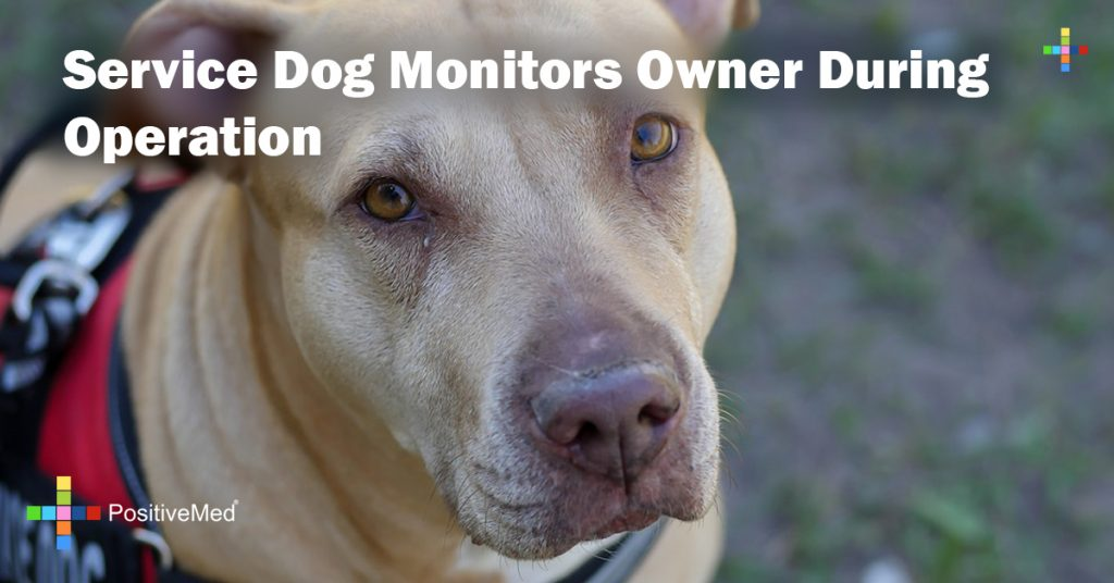 Service Dog Monitors Owner During Operation