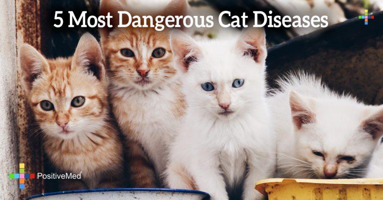 5 Most Dangerous Cat Diseases