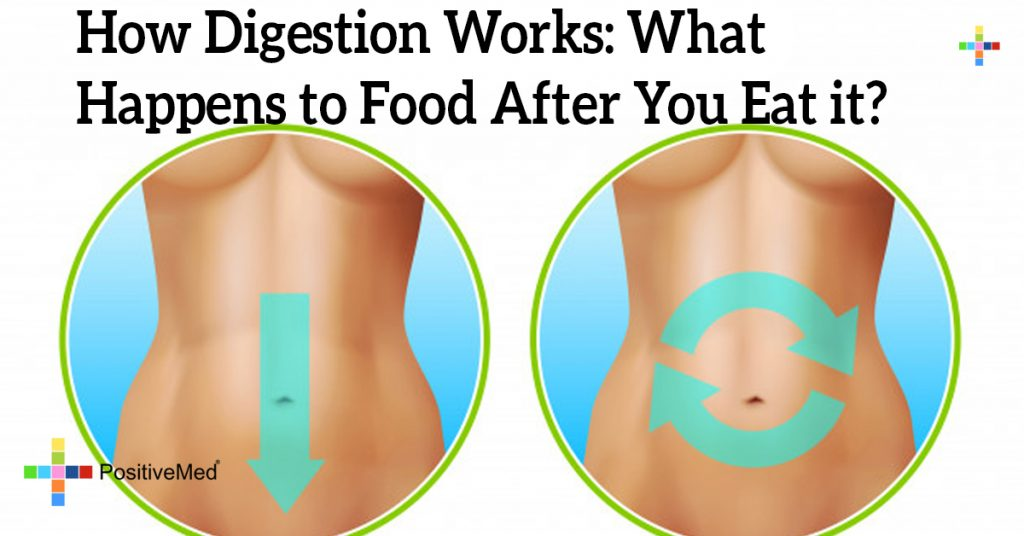 How Digestion Works: What Happens to Food After You Eat it?