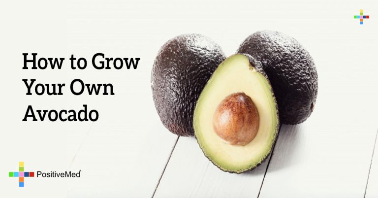 How to Grow Your Own Avocado