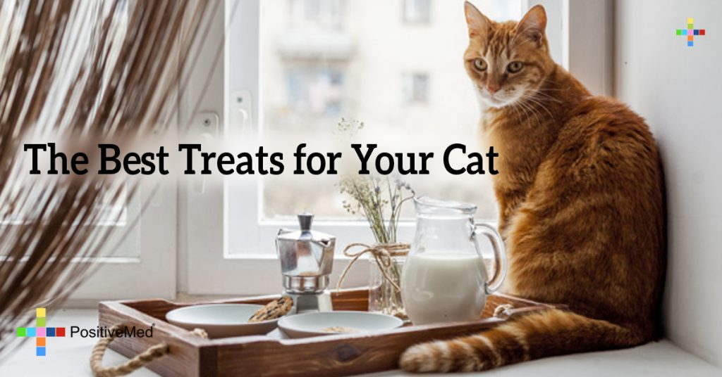 The Best Treats for Your Cat