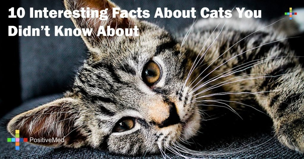10 Interesting Facts About Cats You Didn't Know About